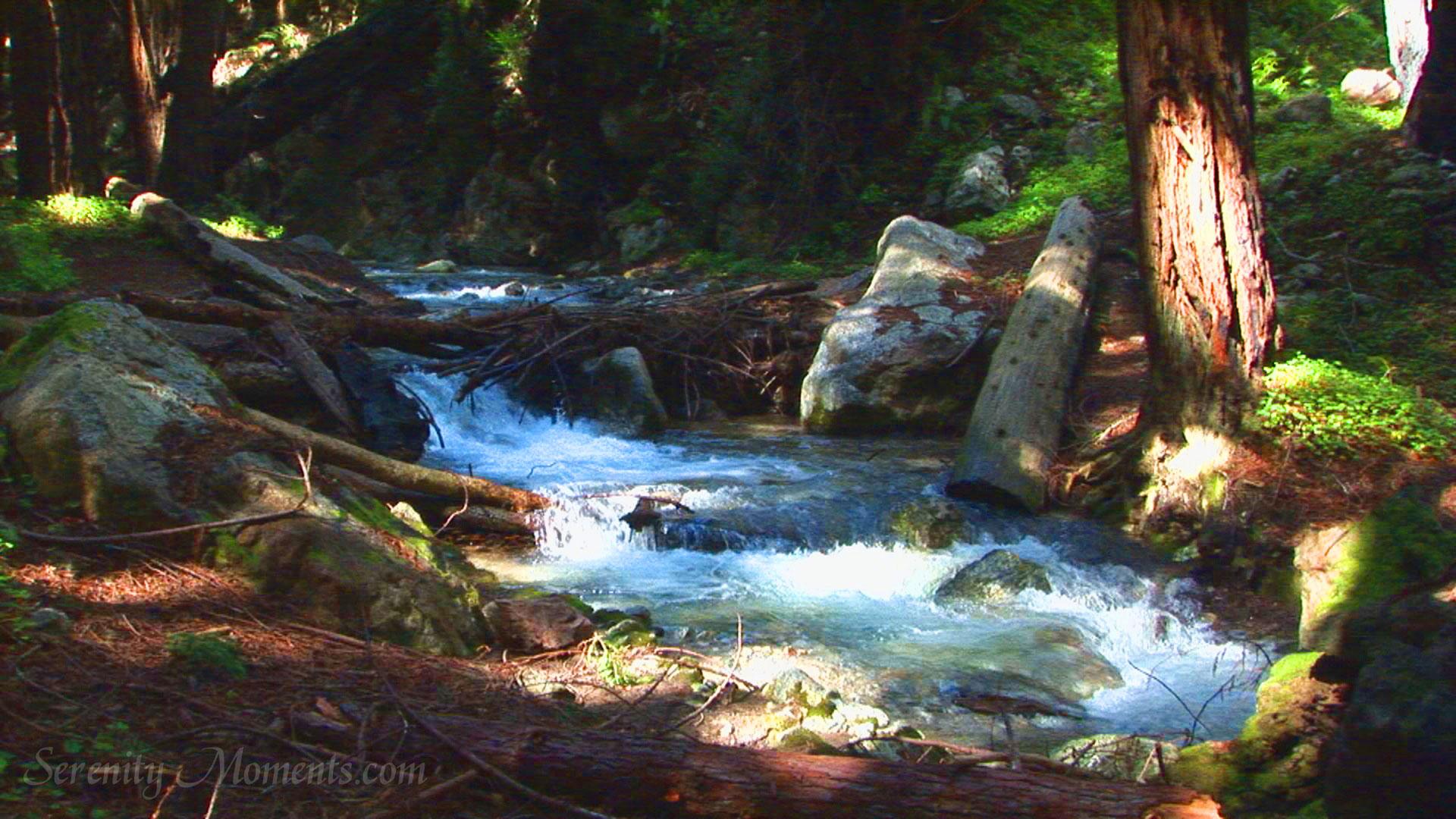 Eastern Territory: Clear Water Creak  Big_sur_forest_lime_kiln_creek